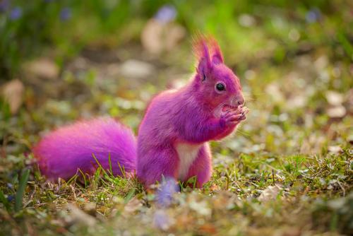 purplesquirrel